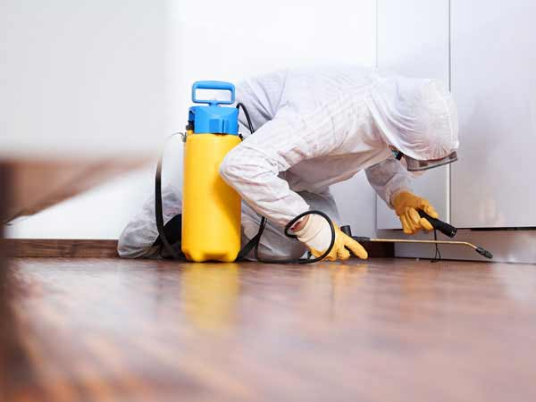 Professional for Mold Removal in Morgantown